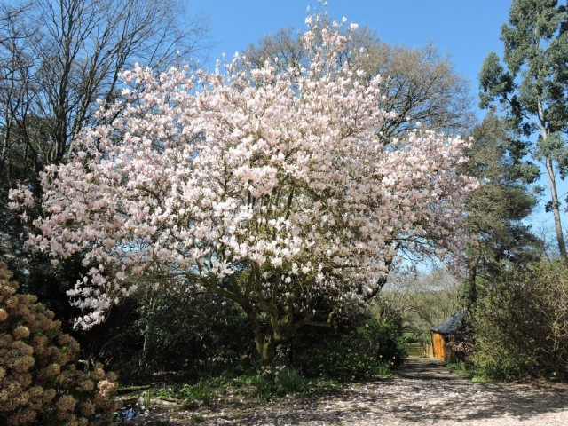 Front garden of Mrs Sarah Price